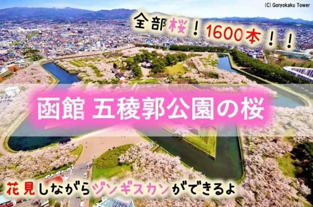 函館 五稜郭公園の桜