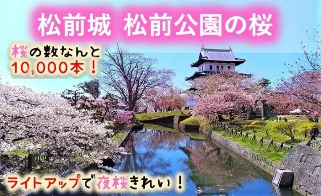 松前城・松前公園の桜