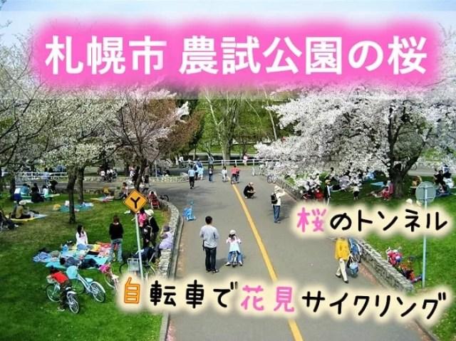 札幌 農試公園の桜