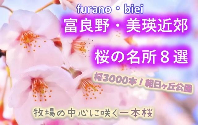 【富良野・美瑛近郊】桜の名所8選!開花予想はいつ?東大演習林はどこ?