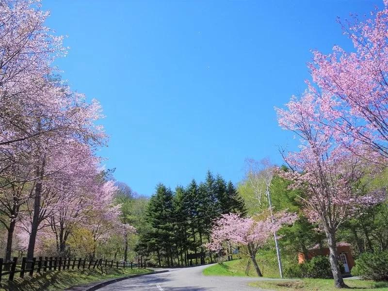 【広尾町】大丸山森林公園