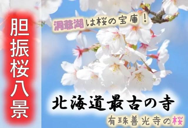胆振桜八景!苫小牧・洞爺湖の開花情報!