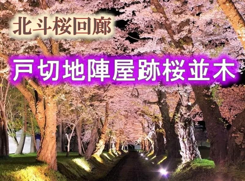 松前藩戸切地陣屋跡桜並木
