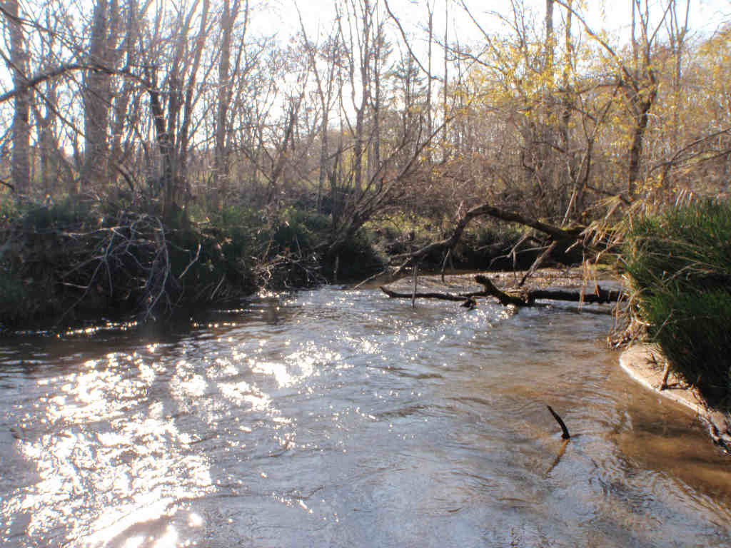 秋の増水湿原河川!10月のアメマス釣行!