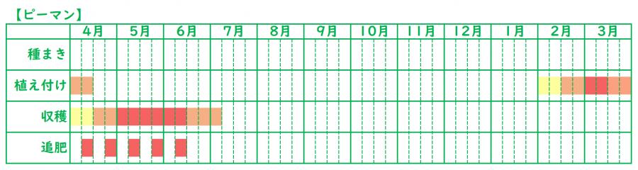 ピーマンの栽培スケジュール