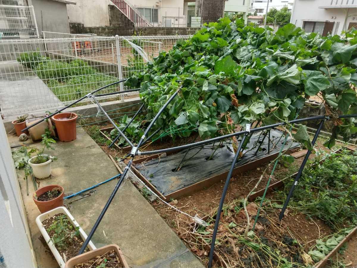 20200825-台風で壊れたパイプ棚