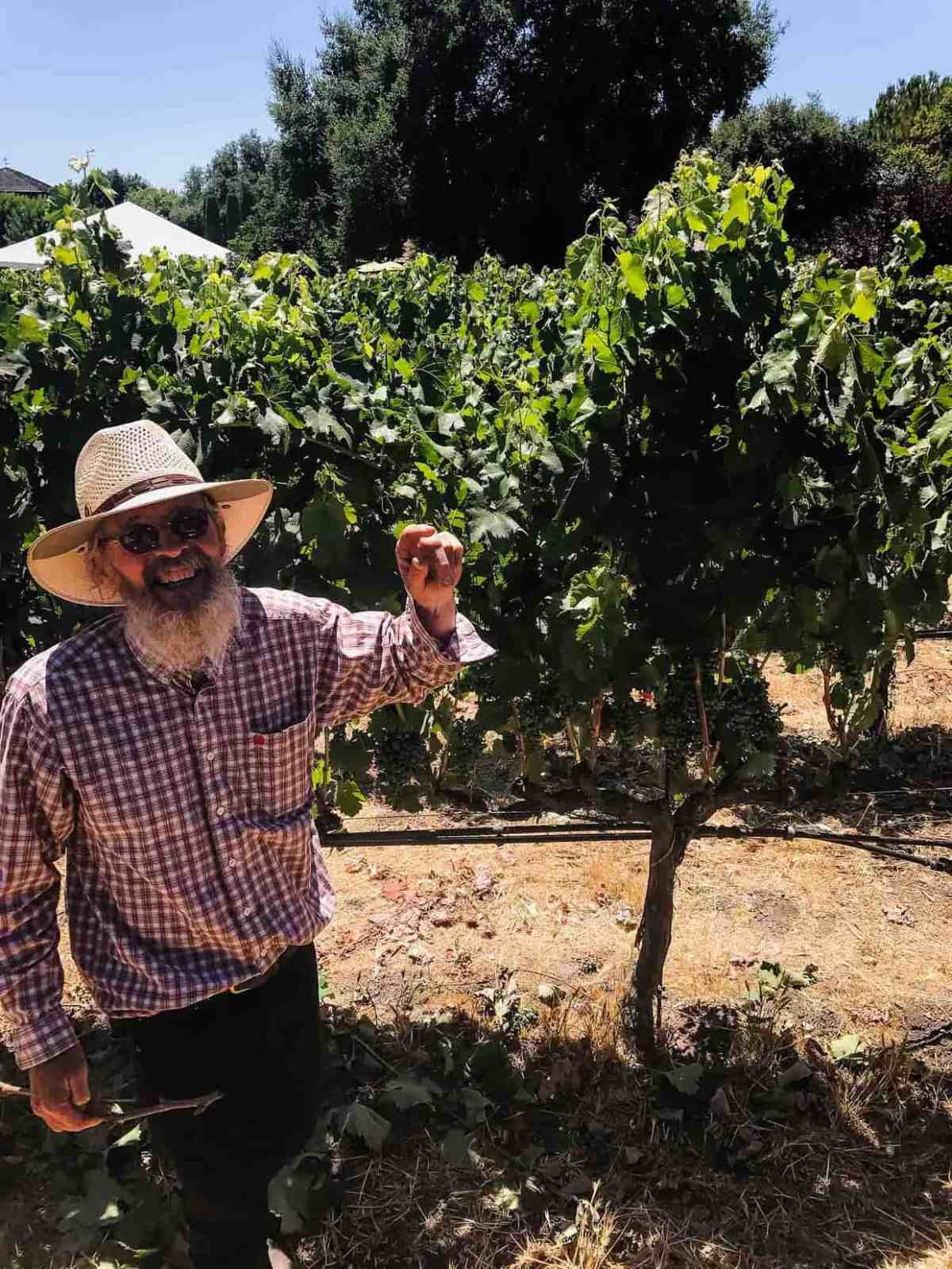 An older man in a plaid shirt and sun hat showing off grapes growing at a vineyard.