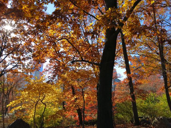 Central Park-2415