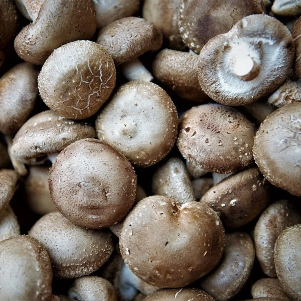 Kitchen Dates – cogumelos shiitake