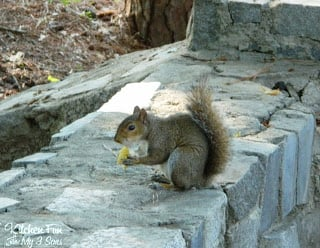 If you give a squirrel a pancake he will NEVER go away