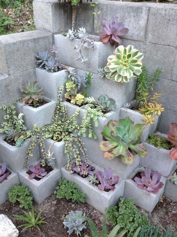Cinder Block Garden Plants