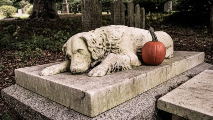 New Law Allows Pets To Be Buried Alongside Their Humans At Cemeteries