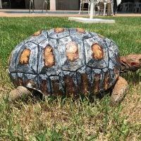 Tortoise Shell 3-D Printer