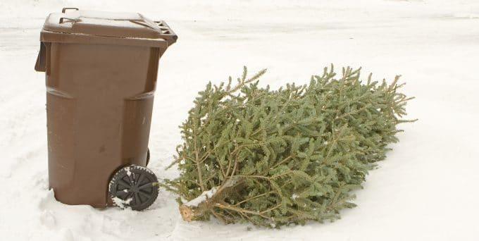 Christmas Tree Trash