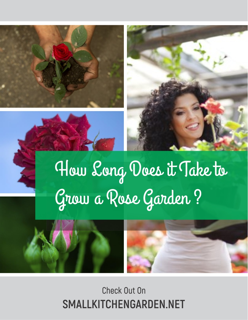 Gorgeous and Simple Rose Garden Ideas (With Landscape and Fence Ideas)