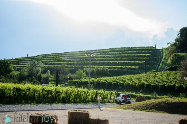 Bastianich-Winery-Orsone-Food-Wine-Music-Festival (22)