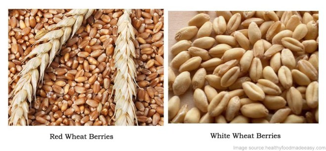 Whole wheat/Red wheat vs white wheat