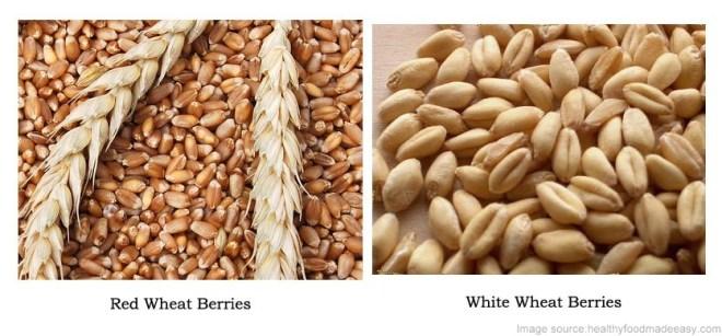 Whole wheat/Red wheat vs white wheat