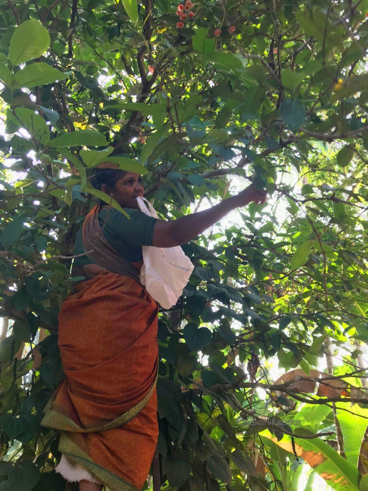 Kerala local produce