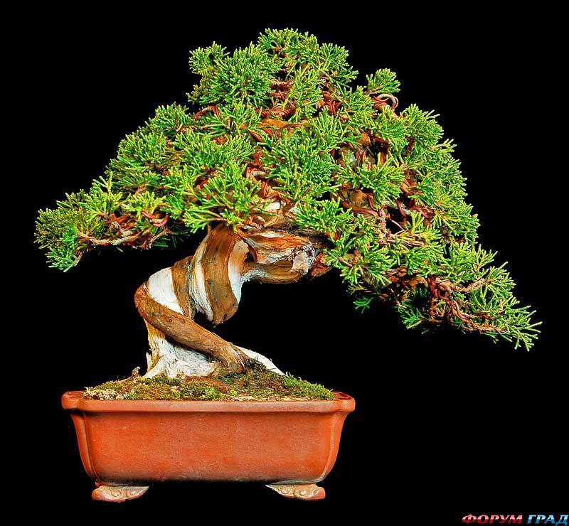 Дерево из мха своими руками