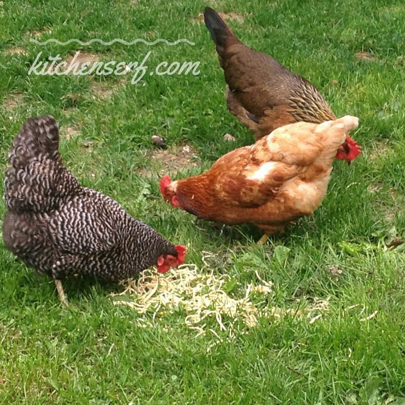 My chickens were all too happy to dine on the NYT recipe for pasta with fried lemon and chile flakes.