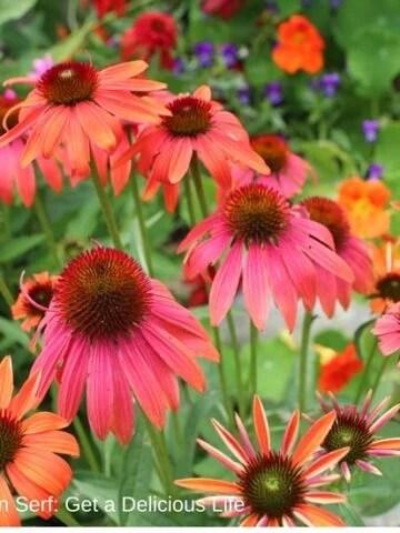 Maine Flowers August