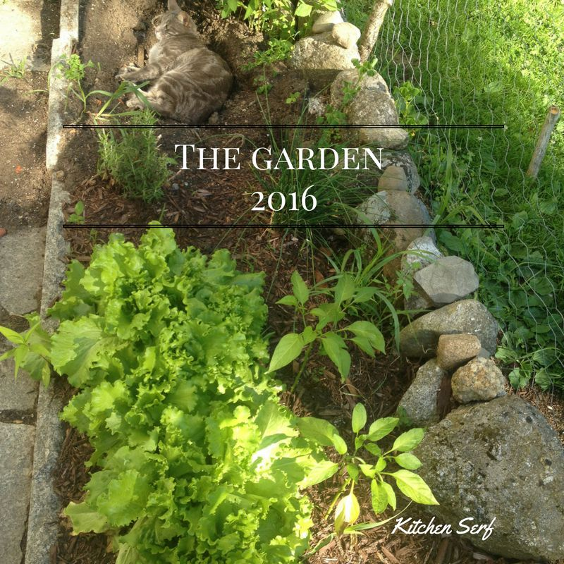 Garden Report: 2016 was an experiment in growing different flowers as well as banana peppers for the first time.
