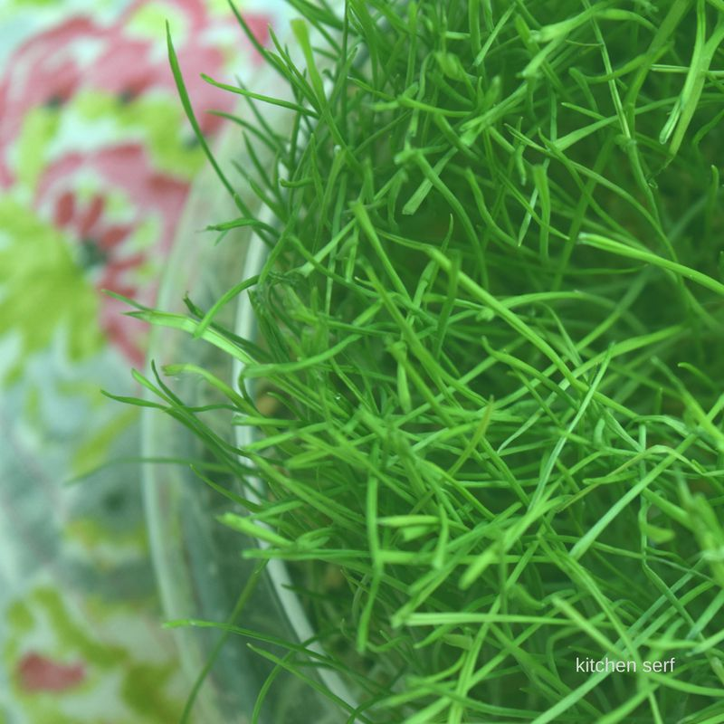 Grass, fresh and bright, is easy to grow for a festive centerpiece or Easter baskets.