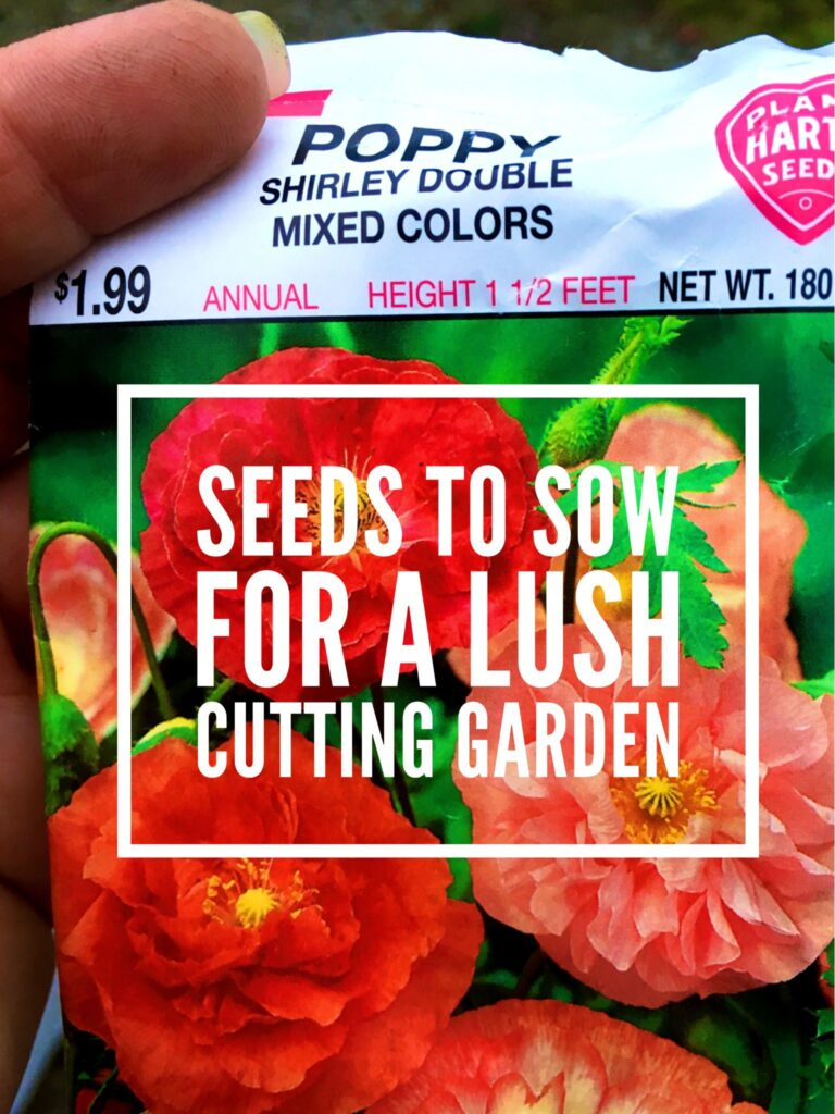 Seeds to sow now for a lush cutting garden this summer include poppies, lots and lots of poppies.