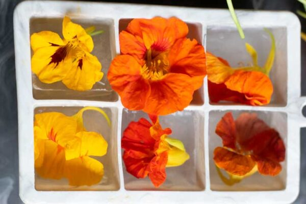 yellow, orange and red nasturtium flowers in an ice cube tray