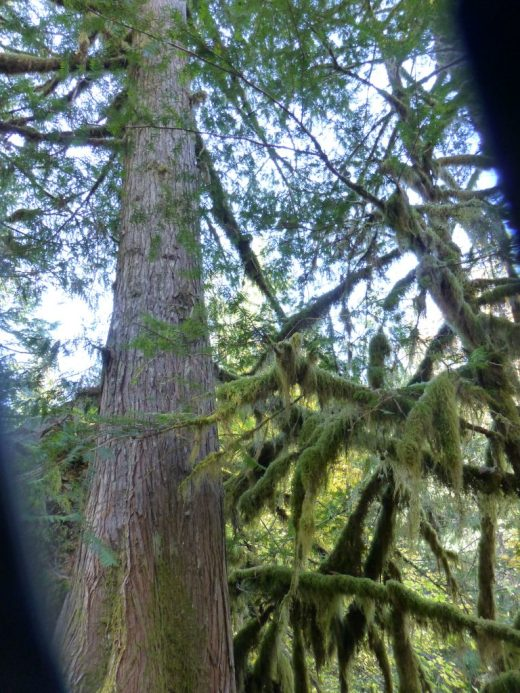 Tall forest trees. Too many choices: the frugality trap