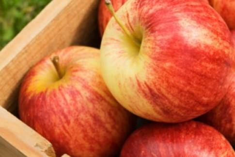 Apple Spice Protein Shake