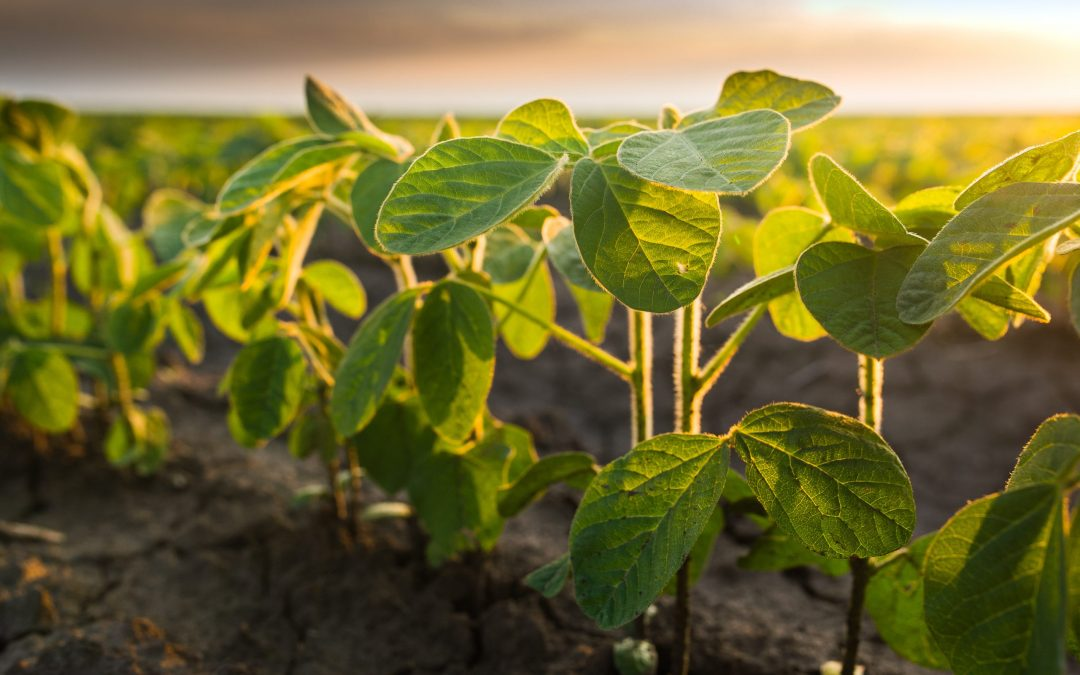 Healthier Soils, Better Food: Our New Partnership with Zero Foodprint