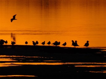 """March 9th, 2016 Gulls returning to Westboro Beach. """"Everyone loves to sit & watch a spectacular sunset."""""""