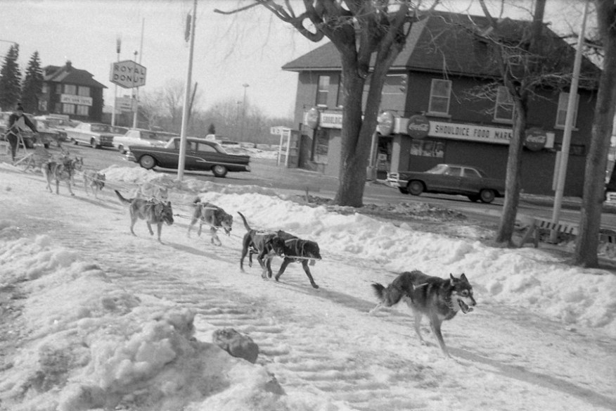 This photo of the dog sled race was taken in 1966 or 1967. Photo by H. Corley Leitch