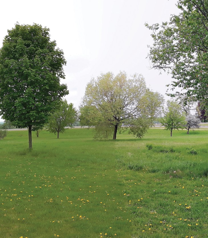 An open green field with trees in spring in Ottawa