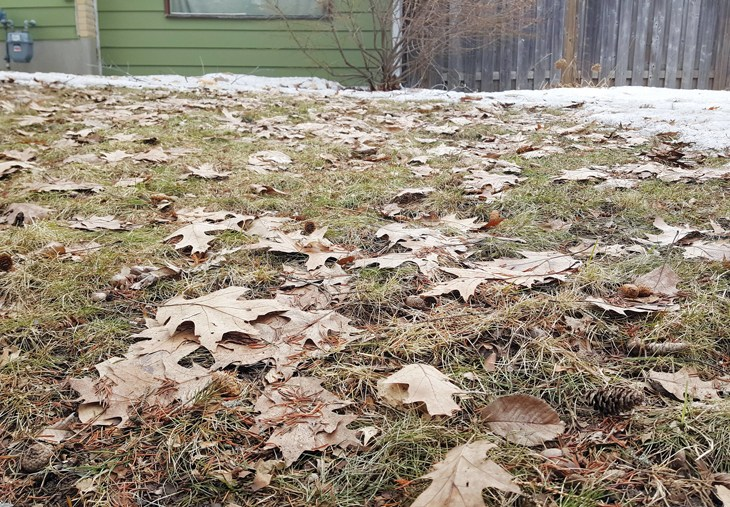 A lawn after a winter thaw with dead leaves on it