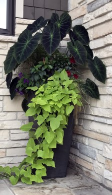 Two green hanging plants are seen in an outdoor container