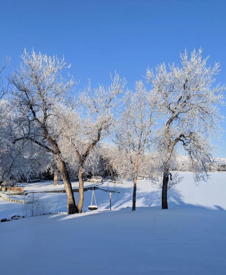 Frost-covered trees in a snowy yard. Photo by Kit Dunsmore