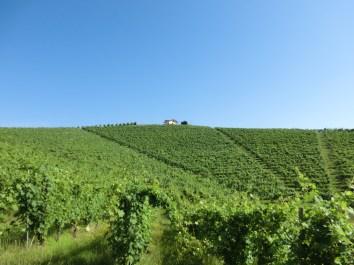 Vineyards 1 Molsino