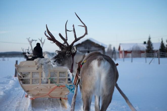 Il giro in slitta con le renne