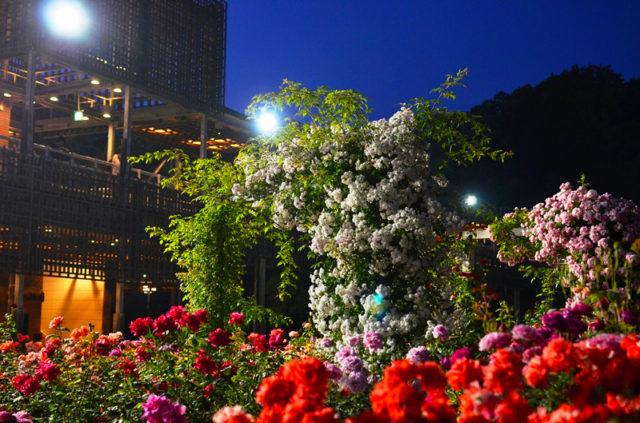 秋の夜長デートコースの始まりは岐阜県可児市のナイトローズガーデンから