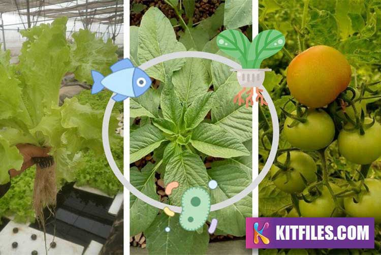 Aquaponic System Farming And Gardening Design Course