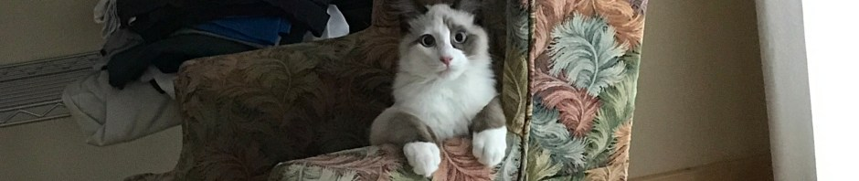 pic of Solo the cat