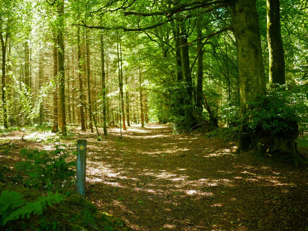 Dartmoor Dawdles: Lustleigh Circular Hiking Route