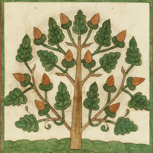 weird tree illustration