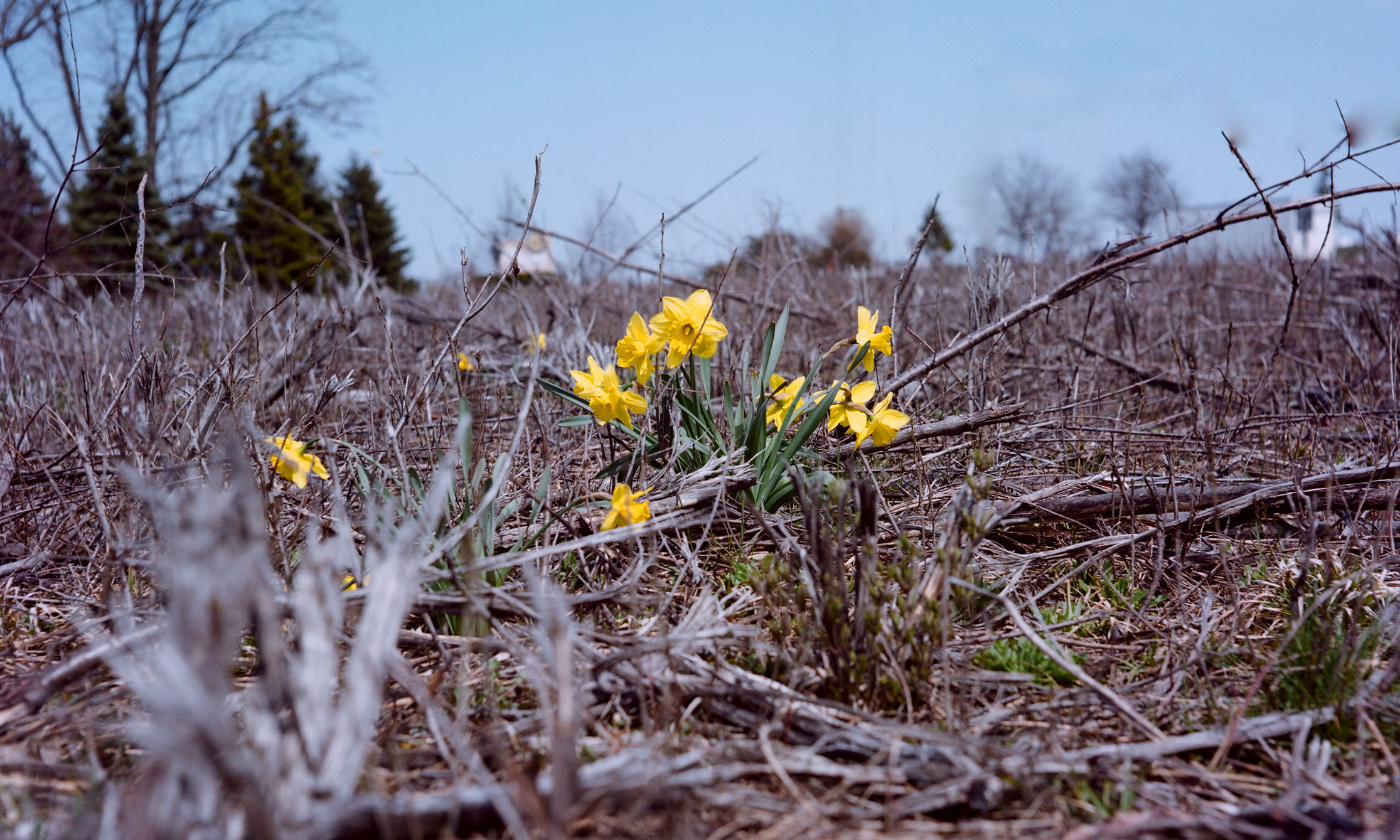 A Handful Of Yellow Flowers Grow In Barren Field Full Dried Up Dead Plants April 27 2013 Flickr Ankur Sohoni CC NC ND License