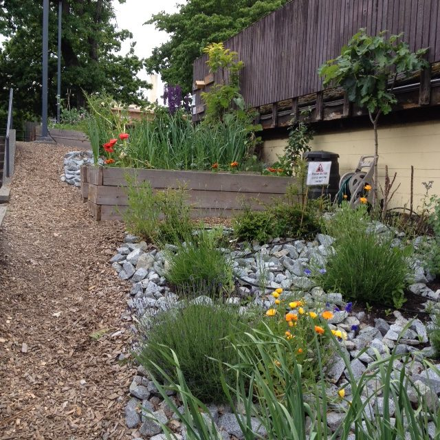 Kitscc_CC_Colaborative_Gardens_2047