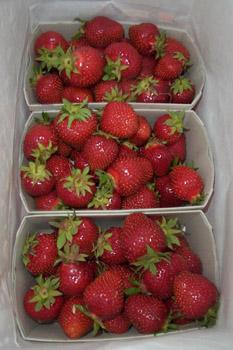 strawberriesbag