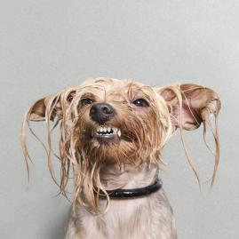 Wet dogs 03